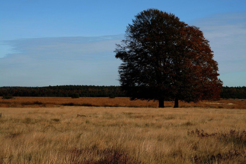 Over de Heide wandelen op de Veluwe
